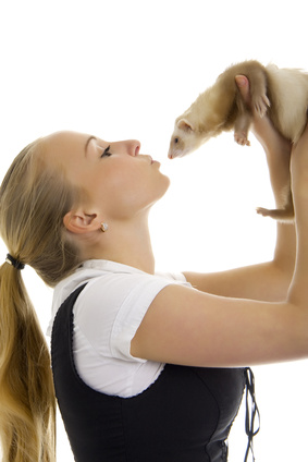 Reasons to choose a ferret for a pet