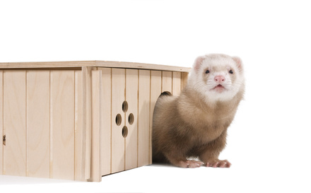 Ferret accessories include comfortable housing