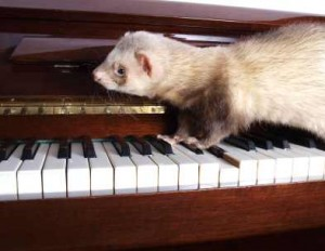 Ferret Playing on Piano