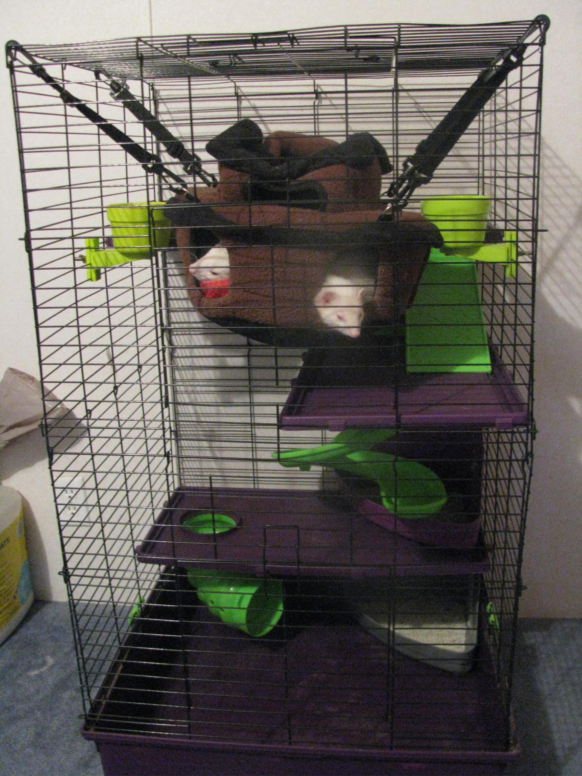 Cleaning Ferret Cage The Ferret Zone