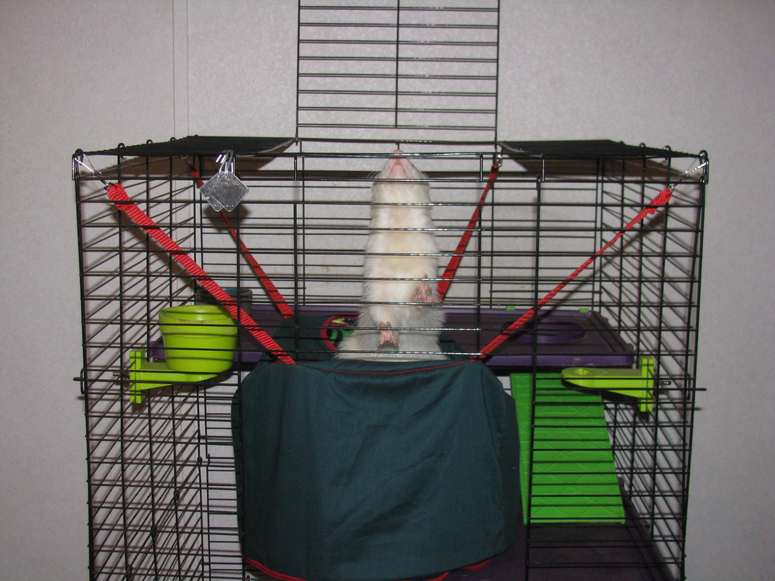 Ferrets Cage The Ferret Zone