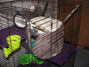 Hanging Ferret Bed